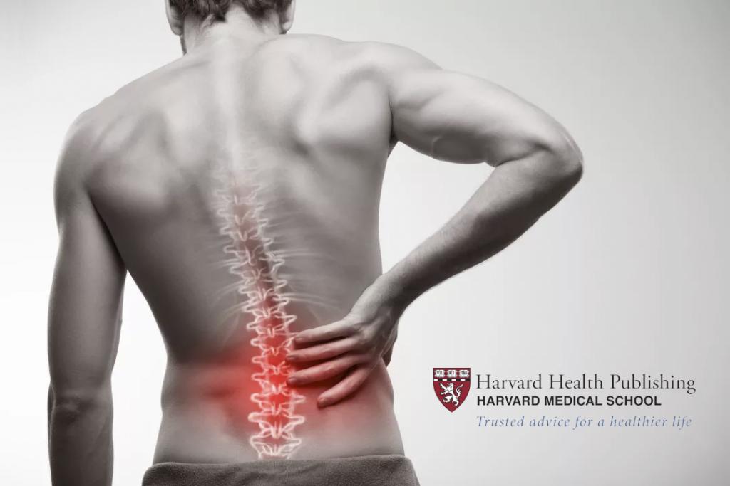 harvard back pain